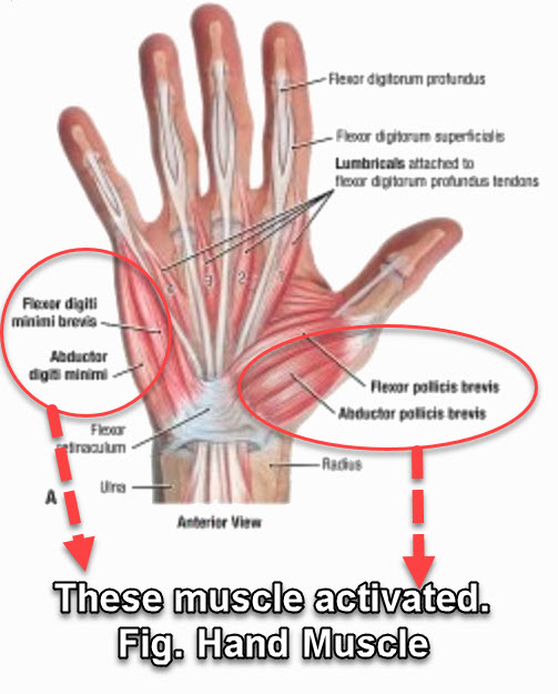 Hand muscle